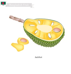 Ripe Jackfruit A Popular Fruit in Bangladesh vector image