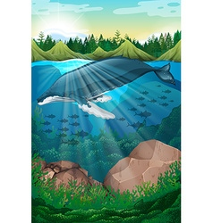 Nature scene with whale under the sea vector