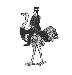 gentleman riding an ostrich sketch vector image