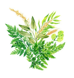 herbal watercolor bouquet with ferns and ears vector image