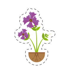 Iris flower garden growing vector