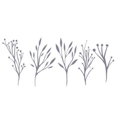 set of delicate leaves and herbs for your vector image