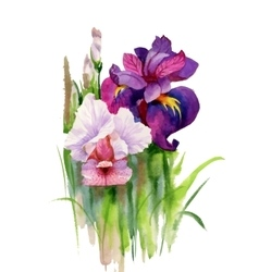 Watercolor blooming iris flowers vector image