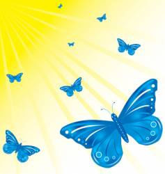 butterfly's and sun vector image
