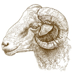 Engraving head of ram vector