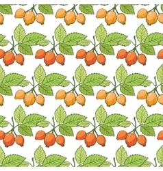 Rosehip Sosa Berries Stripes Seamless vector image