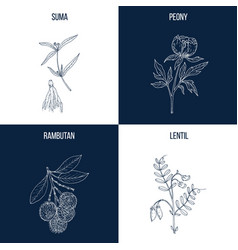 set of four hand drawn eatable and medicinal vector image vector image