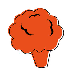 Cauliflower or broccoli icon image vector