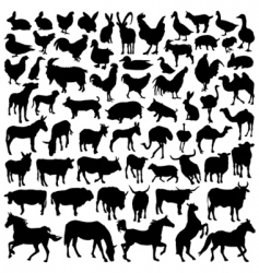 farm animal vector image