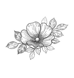 Hand drawn dog-rose flowers with leaves vector