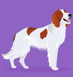 Irish red and white setter dog vector