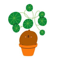 stephania erecta cute cartoon home plant vector image