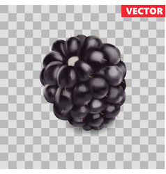 Blackberry sweet fruit 3d icon realistic vector