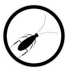 Cockroach button on white vector image
