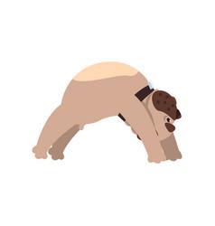French bulldog doing yoga bridge pose funny dog vector