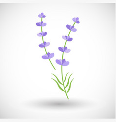 Lavender plant flat icon vector