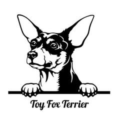 Toy fox terrier peeking dog - head isolated on vector