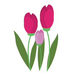 tulip bunch natural floral vector image vector image