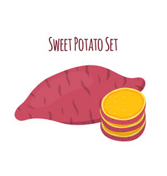 Batat sweet potato and slices organic vegetable vector