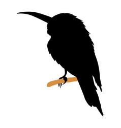 Bee-eater vector