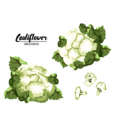 Cartoon cauliflower ripe green vegetable vector