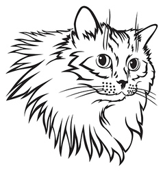 cat furry mane vector image