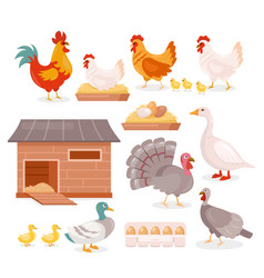 chicken in farm barn henhouse isolated set hen vector image