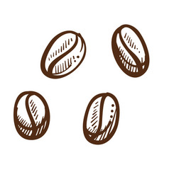 coffee beans isolated seeds fragrant drink vector image
