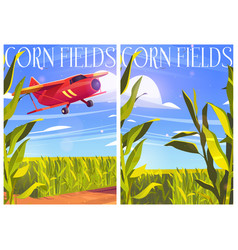 corn fields posters with plants and red airplane vector image