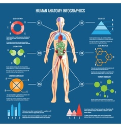 human body anatomy infographic design vector image