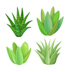isolated succulents on white background vector image