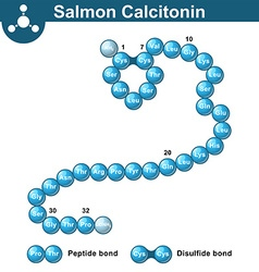 Salmon calcitonin hormone structure vector