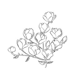 Flowering branch of magnolia on white background vector