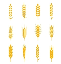 Ears of wheat bread symbols vector