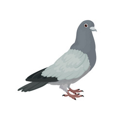 Grey urban pigeon side view vector