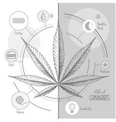 Hand drawing realistic cannabis leaf many uses vector