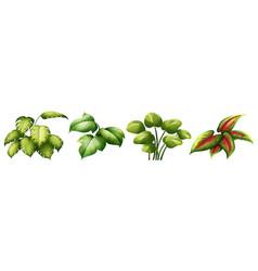 set of leaf plant vector image