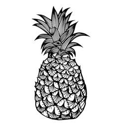 Tropical fruit pineapple vector