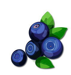 Fresh juicy blueberries with green leaves isolated vector