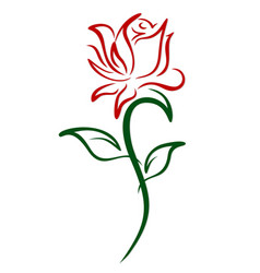 Red garden rose vector