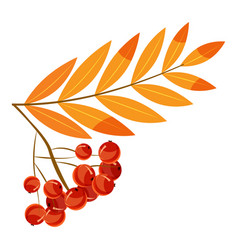 Rowanberry branch icon cartoon style vector