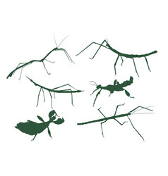 Stick insect pack vector