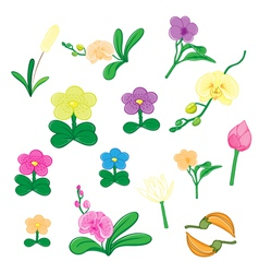 Set of flower on white background vector image vector image