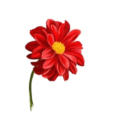 Dahlia flower hand drawn vector