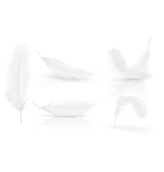 Realistic 3d white bird angel feathers set vector
