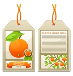 Sale tag of seedlings orange trees Instructions vector image