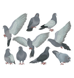 Grey pigeons set doves in different poses vector