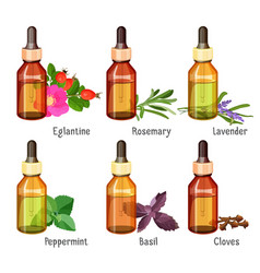 medical natural oils of wild herbs in bottles vector image