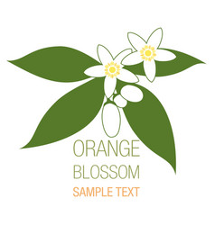 Orange blossom flowers with buds and leaves vector