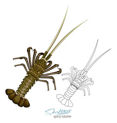 Spiny lobster in cartoon style vector